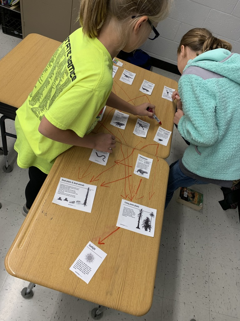 Students work to make a dinosaur food web